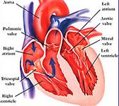 Stati prediabetici e rischio cardiovascolare
