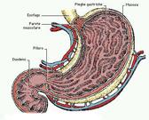 Gastroprotezione e nuove terapie per RCU